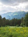 Paisagem com árvores e montanhas Foto de Stock