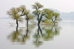 Paisagem com árvores e montes Foto de Stock Royalty Free
