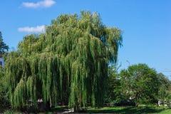 Paisagem com árvores e nuvens Foto de Stock Royalty Free