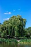 Paisagem com árvores e nuvens Imagem de Stock