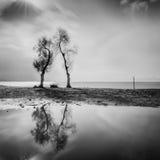 Paisagem com árvores e reflexões imagem de stock royalty free