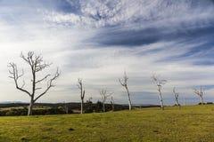 Paisagem com árvores inoperantes Bingie NSW austrália Fotografia de Stock
