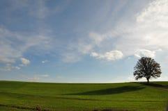 Paisagem com única árvore Fotografia de Stock Royalty Free