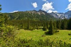 Paisagem com abeto, Zakopane da montanha, Polônia fotografia de stock royalty free