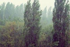 Paisagem com as árvores na tempestade pesada do verão imagem de stock royalty free