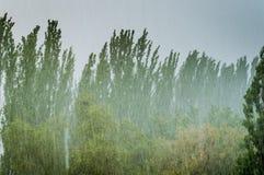 Paisagem com as árvores na tempestade pesada do verão fotos de stock