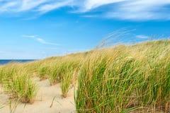 Paisagem com as dunas de areia em Cape Cod Imagem de Stock