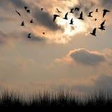 Paisagem com as silhuetas da grama e dos pássaros Fotos de Stock Royalty Free
