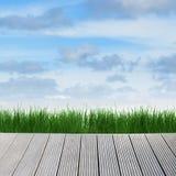 Paisagem com céu, grama e madeira Fotos de Stock Royalty Free