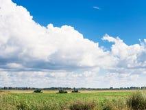 Paisagem com campo agrário e o céu azul Fotos de Stock Royalty Free