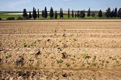 Paisagem com campo agricultural Imagens de Stock Royalty Free