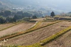 Paisagem com campo agricultural Fotografia de Stock