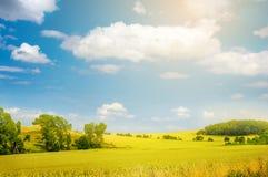 Paisagem com campo amarelo e o céu azul Imagens de Stock Royalty Free