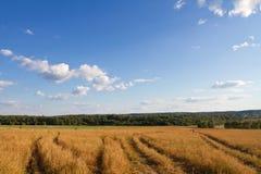 Paisagem com campo, céu e floresta Imagens de Stock Royalty Free