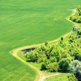 Paisagem com campo de grama verde Imagem de Stock