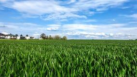 Paisagem com campo de milho na mola Fotografia de Stock