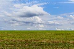 Paisagem com campo de plantas de feijão de soja no céu azul Brasil, Ámérica do Sul imagens de stock royalty free