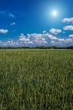 Paisagem com campo do centeio verde Fotografia de Stock Royalty Free