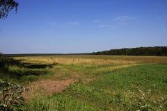 Paisagem com campo e floresta Imagens de Stock Royalty Free