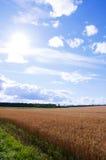 Paisagem com campo e nuvens de trigo Fotografia de Stock