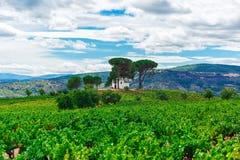 Paisagem com campo verde Foto de Stock