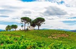 Paisagem com campo verde Foto de Stock Royalty Free