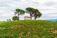 Paisagem com campo verde Imagem de Stock