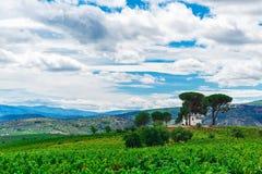 Paisagem com campo verde Fotografia de Stock Royalty Free