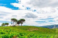 Paisagem com campo verde Fotos de Stock Royalty Free