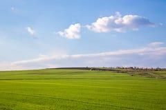 Paisagem com campo verde e o céu azul Imagens de Stock Royalty Free
