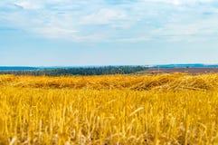Paisagem com campos de grão amarelos Imagens de Stock