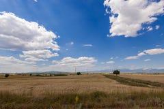 Paisagem com campos de trigo e o céu nebuloso Fotos de Stock Royalty Free