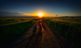 Paisagem com campos no nascer do sol Imagem de Stock