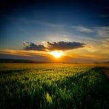Paisagem com campos no verão no por do sol Imagens de Stock