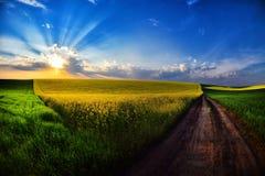 Paisagem com campos no verão no por do sol Imagens de Stock Royalty Free