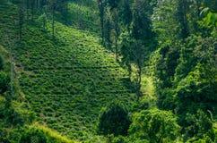 Paisagem com campos verdes de Imagens de Stock
