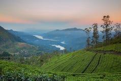 Paisagem com campos verdes do chá Fotos de Stock Royalty Free