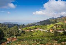 Paisagem com campos verdes do chá Fotografia de Stock Royalty Free