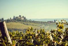 Paisagem com a casa de campo rural de Toscânia sobre o vinhedo com ramos do vinho Vilas de Itália foto de stock