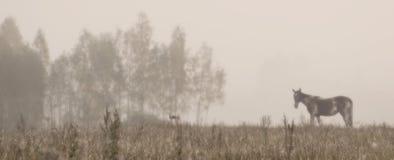 Paisagem com cavalo e névoa Fotografia de Stock Royalty Free