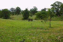 Paisagem com cavalos, vale de Megalong, montanhas azuis, Australi Imagens de Stock