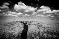 Paisagem com cloudscape bonito Imagem de Stock