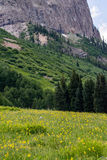 Paisagem com crista e wildflowers da montanha de Colorado do montículo imagem de stock royalty free