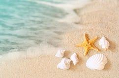 Paisagem com escudos na praia tropical Fotografia de Stock