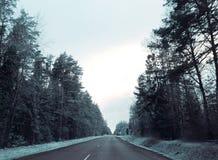 Paisagem com estrada asfaltada e floresta Fotografia de Stock