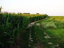 Paisagem com estrada do campo, milho Imagem de Stock Royalty Free