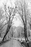 Paisagem com flocos de neve de queda - banco do inverno coberto com o sn foto de stock
