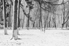 Paisagem com flocos de neve de queda - banco do inverno coberto com o sn imagem de stock royalty free