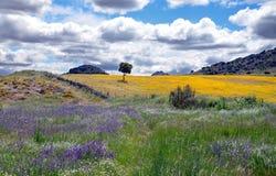 Paisagem com flores coloridas Fotos de Stock Royalty Free