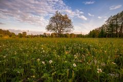 Paisagem com flores da morango Foto de Stock Royalty Free
